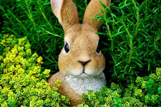 bunny-cute-ears-easter-bunny-383557