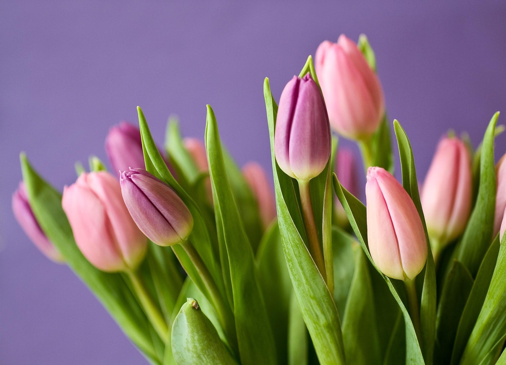bloom-blossom-flora-54186
